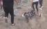 VIDEO | Palestinos de Gaza capturan dron israelí equipado con gases lacrimógenos y éste se autodestruye