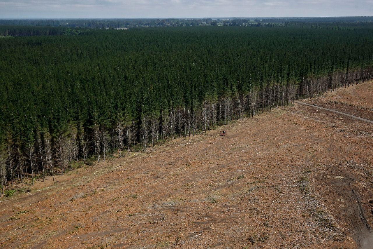 hectáreas Forestal Arauco